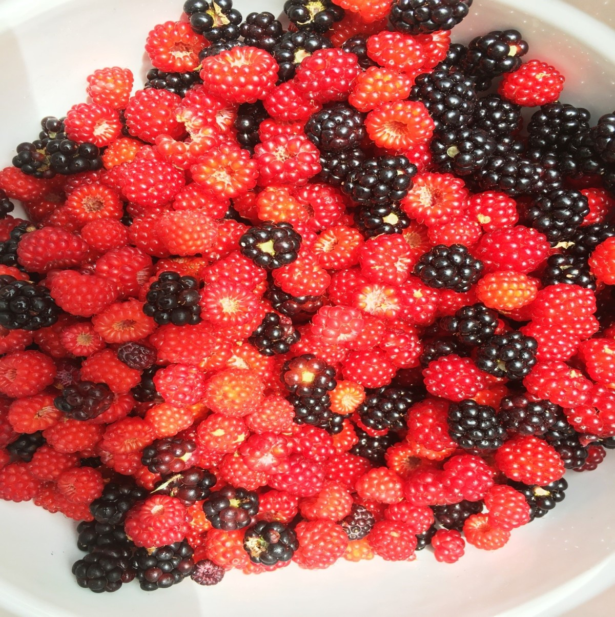 wineberries2